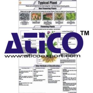 botany-charts-policharts-186x300