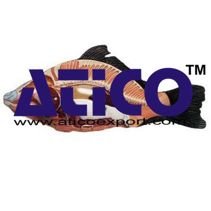 Fish Anatomy Model Manufacturer Supplier India - Atico Export