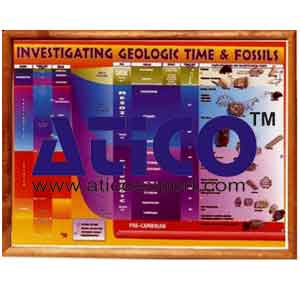 Investigating Geological Time And Fossils Chart
