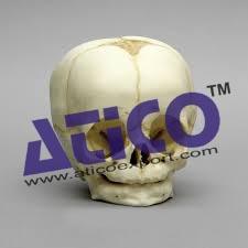 baby-skull