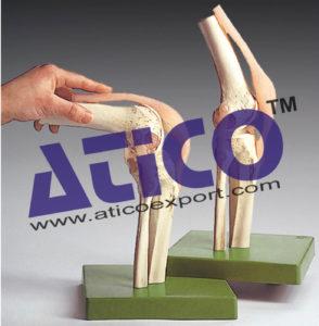 knee-joint-set-model