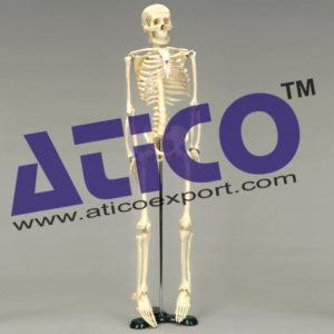 mini-skeleton