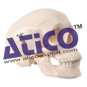 mini-skull-3-parts