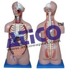 torso-open-back-sexless-17-part